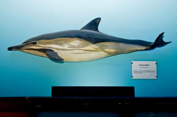 Museo Oceanografico Damaso Antonio Larrañaga
