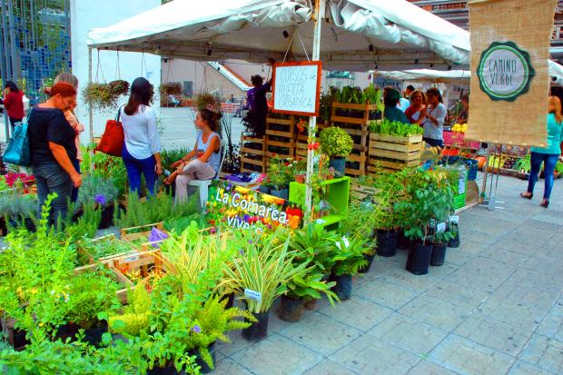 Feria Camino Verde