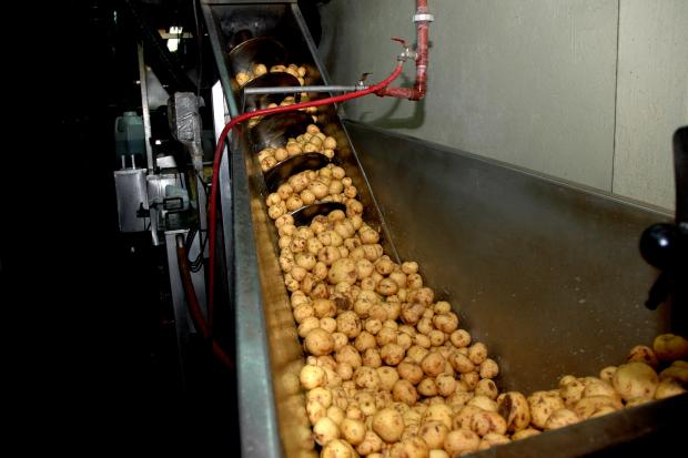 Empresa de alimentos en el PTI