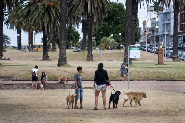 Espacio público para perrros