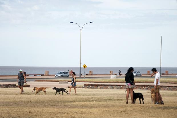 Área habilitada para perros sueltos. Rambla y Barrios Amorín.