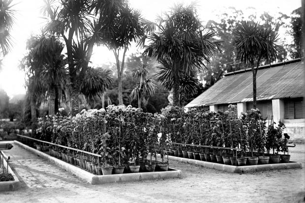 Parque del Prado. Jardín Botánico. Año 1919. (Foto: 02455FMHGE.CDF.IMO.UY - Autor: s.d./IMO)