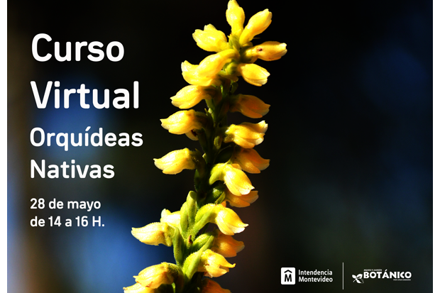 Curso VIRTUAL Orquídeas Nativas