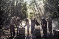 La miel de Dios. Estados Unidos, 2018 - 2020