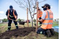 Plantación de árboles en Plaza Boix y Merino