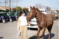 Jornada de sustitución de caballos por motocarros