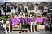 Feria de la Primavera