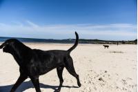 Jornada de limpieza en playa Santa Catalina en el marco del Día de la Tierra