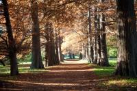 Muestra fotográfica 115 años del Jardín Botánico