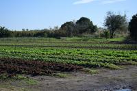 Montevideo Rural