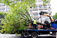 Transplante de árboles