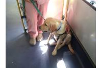 Perro guía en el transporte