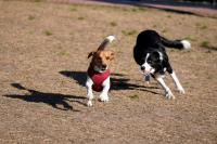 Parque canino de Punta Carretas