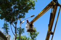 Calle Isla de Flores, arreglos preparativos de llamadas 2017