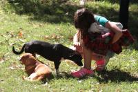Jornadas de adopción de perros y gatos