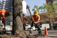 Corte de árboles en Plan Vereda