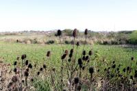 Recorrida arroyo Pantanoso
