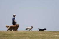 Jornada sobre tenencia responsable de mascotas