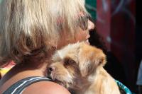 Jornada de castraciones a perros y gatos