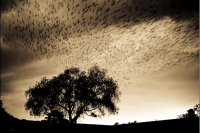 Una historia de migraciones
