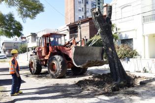 Plan de reforestación