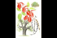 Curso - Taller de Dibujo de Plantas