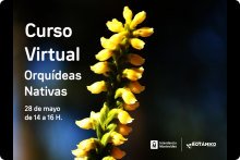Curso VIRTUAL Orquídeas Nativas