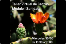 Taller Virtual de Cactus Módulo I Sanidad