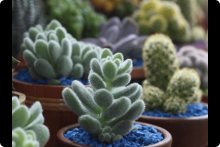 Curso Cactus y Crasas Módulo I