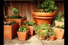 Curso Cultivo de plantas en macetas