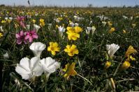 El campo Natural y sus servicios ecosistémicos