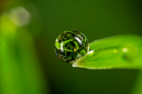 El mundo en una gota. Una exploración fotográfica de la vida microscópica