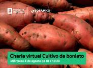 Charla virtual cultivo de boniato